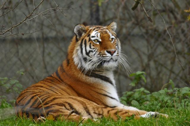 Lo zoo di Hellabrun a Monaco di Baviera