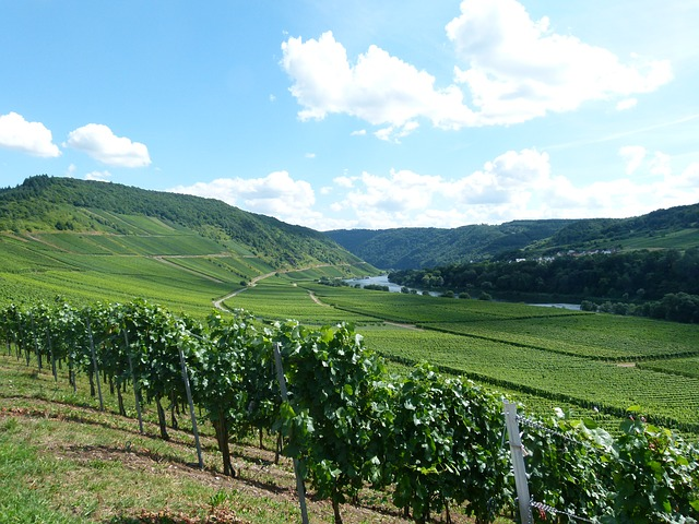 La valle della Mosella è una delle mete per escursioni in Germania più apprezzate