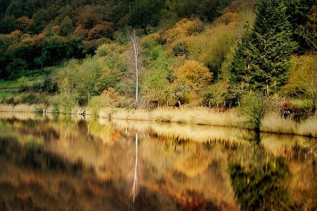 Il parco nazionale Eifel in Germania