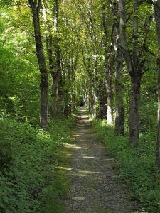 Un percorso nella foresta del Bad Mergentheim