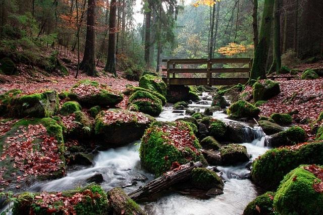 Un sentiero della Foresta di Teutoburgo